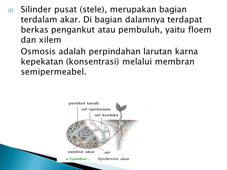 d) Silinder pusat (stele), merupakan bagian terdalam akar.