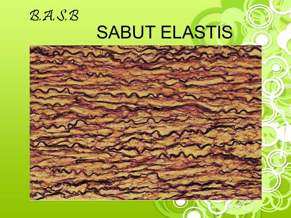 B.A.S.B SABUT ELASTIS