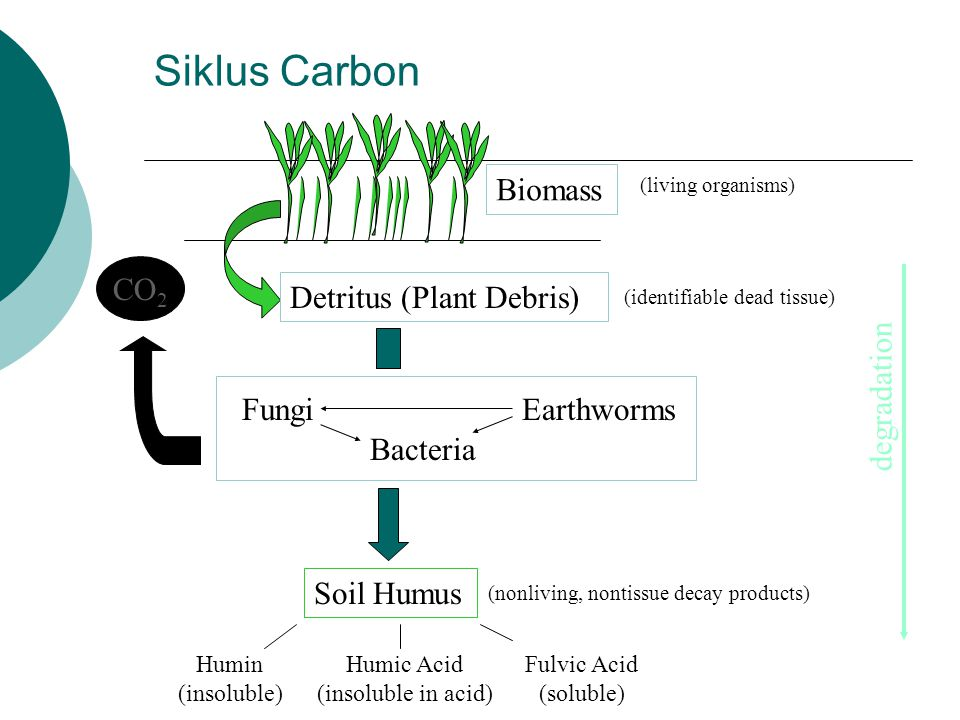 Siklus Carbon CO 2 Detritus (Plant Debris) FungiEarthworms Bacteria Soil Humus Biomass Humin (insoluble) Humic Acid (insoluble in acid) Fulvic Acid (s