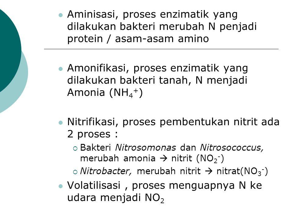 Aminisasi, proses enzimatik yang dilakukan bakteri merubah N penjadi protein / asam-asam amino Amonifikasi, proses enzimatik yang dilakukan bakteri ta
