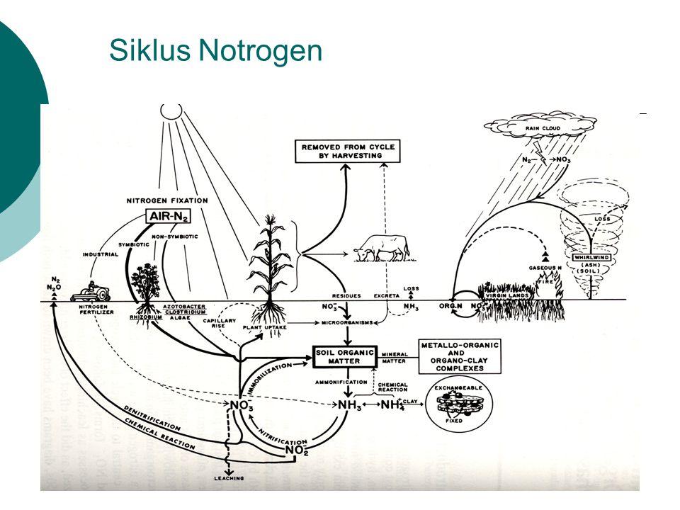 Siklus Notrogen