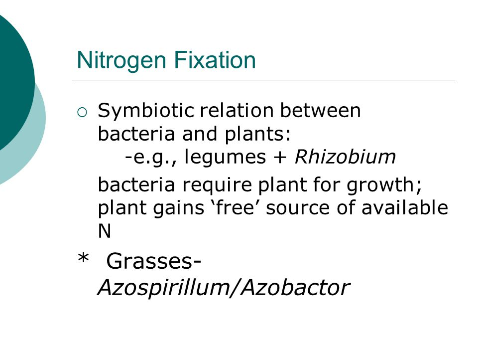 Nitrogen Fixation  Symbiotic relation between bacteria and plants: -e.g., legumes + Rhizobium bacteria require plant for growth; plant gains 'free' s