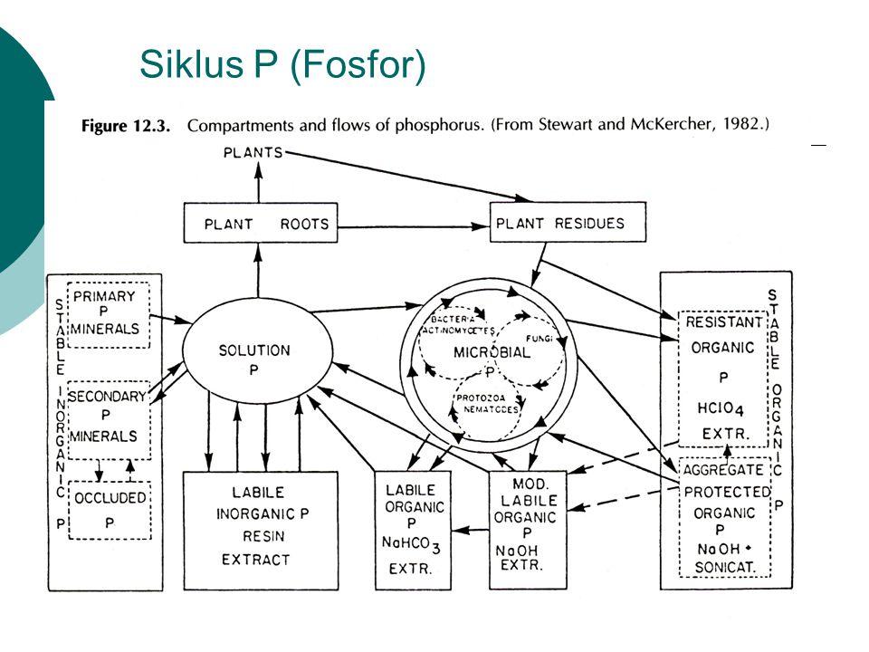 Siklus P (Fosfor)
