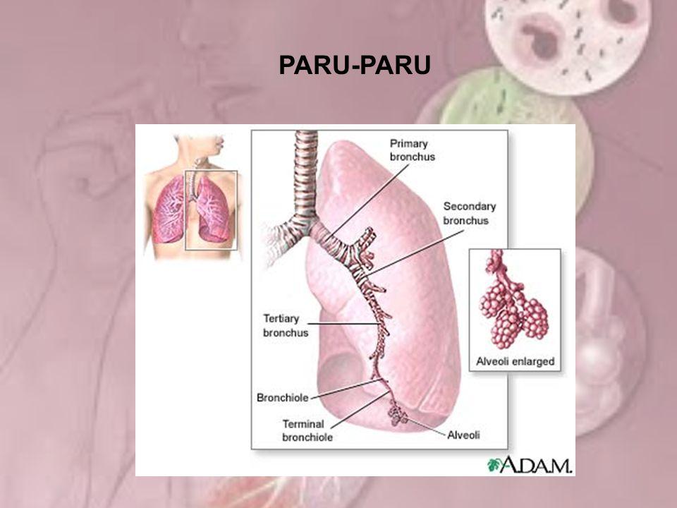 Patofisiologi Mekanisme pertahanan terganggu Terbentuk sekret virulen Sekret berlebih turun ke alveoli Kuman masuk ke saluran napas atas Inflamasi