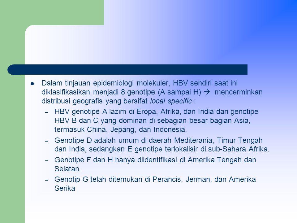 Dalam tinjauan epidemiologi molekuler, HBV sendiri saat ini diklasifikasikan menjadi 8 genotipe (A sampai H)  mencerminkan distribusi geografis yang bersifat local specific : – HBV genotipe A lazim di Eropa, Afrika, dan India dan genotipe HBV B dan C yang dominan di sebagian besar bagian Asia, termasuk China, Jepang, dan Indonesia.