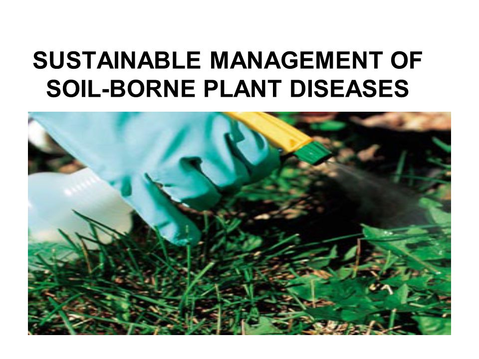 SUSTAINABLE MANAGEMENT OF SOIL-BORNE PLANT DISEASES