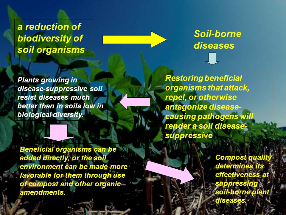 a reduction of biodiversity of soil organisms Soil-borne diseases Restoring beneficial organisms that attack, repel, or otherwise antagonize disease-