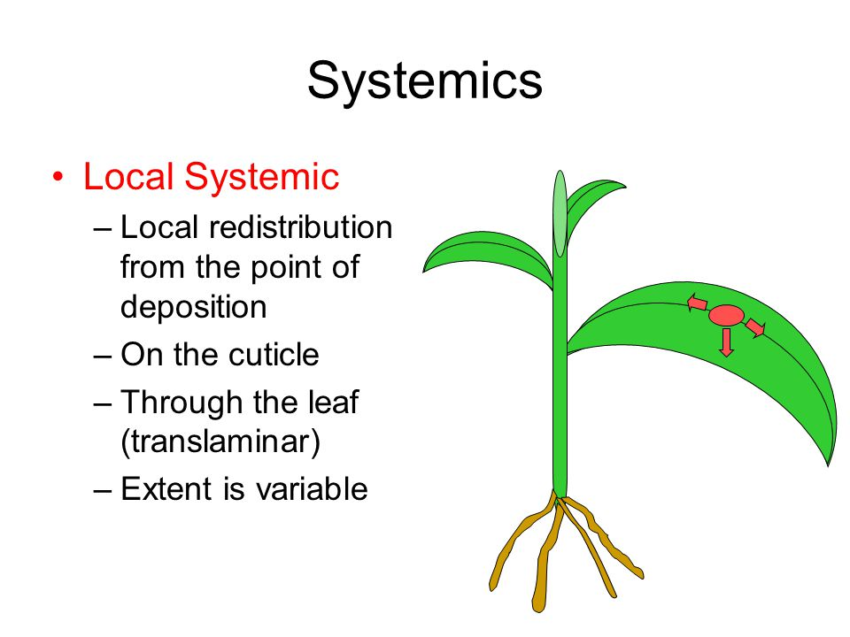 Systemics Local Systemic –Local redistribution from the point of deposition –On the cuticle –Through the leaf (translaminar) –Extent is variable