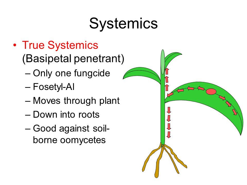 Systemics True Systemics (Basipetal penetrant) –Only one fungcide –Fosetyl-Al –Moves through plant –Down into roots –Good against soil- borne oomycetes