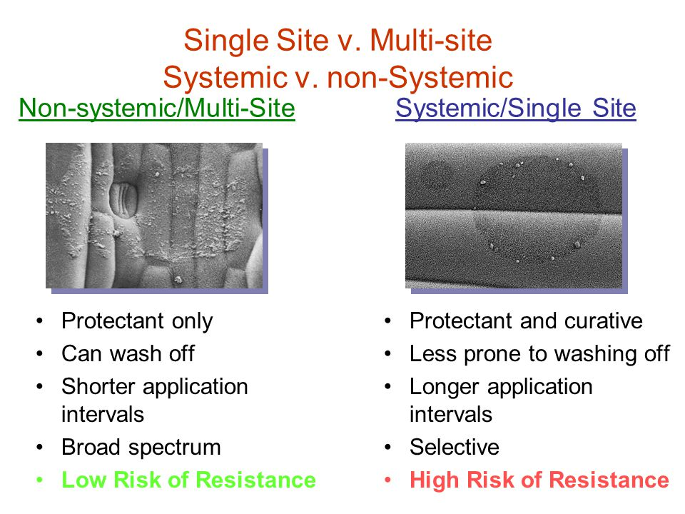 Single Site v. Multi-site Systemic v. non-Systemic Protectant only Can wash off Shorter application intervals Broad spectrum Low Risk of Resistance Pr