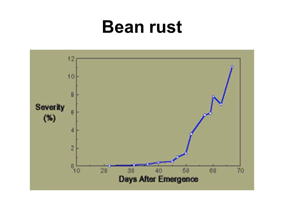 Bean rust