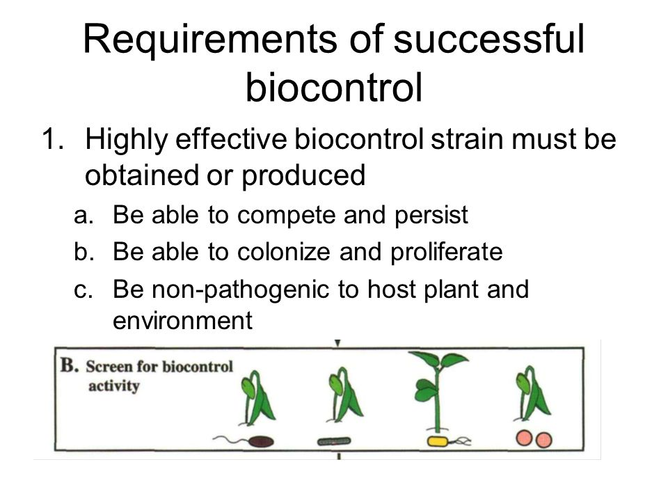 Requirements of successful biocontrol 1.Highly effective biocontrol strain must be obtained or produced a.Be able to compete and persist b.Be able to colonize and proliferate c.Be non-pathogenic to host plant and environment
