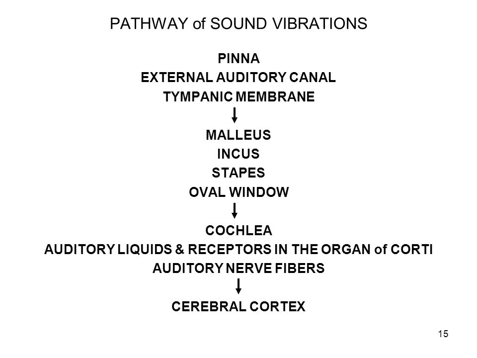 15 PATHWAY of SOUND VIBRATIONS PINNA EXTERNAL AUDITORY CANAL TYMPANIC MEMBRANE MALLEUS INCUS STAPES OVAL WINDOW COCHLEA AUDITORY LIQUIDS & RECEPTORS I