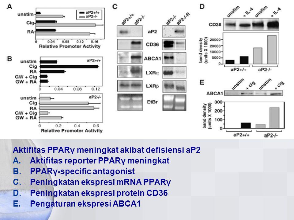 Aktifitas PPARγ meningkat akibat defisiensi aP2 A. Aktifitas reporter PPARγ meningkat B. PPARγ-specific antagonist C. Peningkatan ekspresi mRNA PPARγ