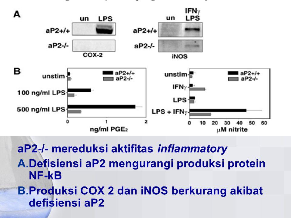 aP2-/- mereduksi aktifitas inflammatory A. Defisiensi aP2 mengurangi produksi protein NF-kB B. Produksi COX 2 dan iNOS berkurang akibat defisiensi aP2