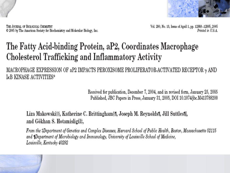 Ekspresi inflammatory LPS dan CD154 dirusak aP2-/- macrophage A.