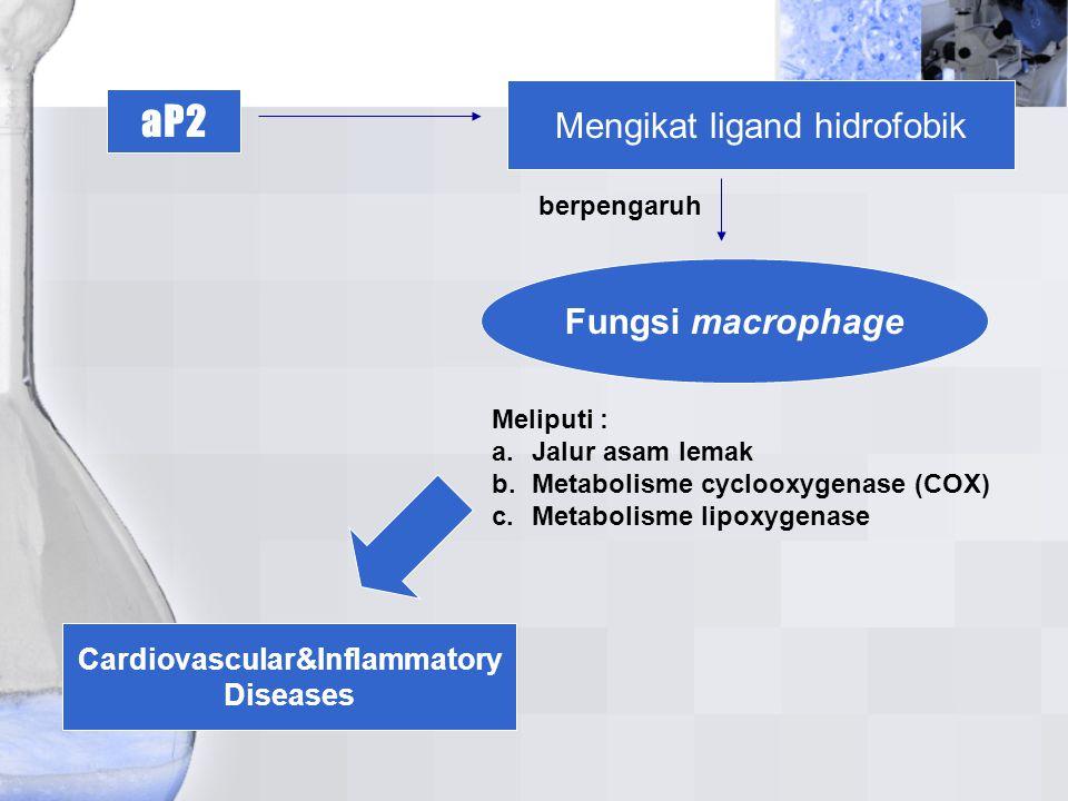 aP2 Mengikat ligand hidrofobik Fungsi macrophage berpengaruh Meliputi : a.Jalur asam lemak b.Metabolisme cyclooxygenase (COX) c.Metabolisme lipoxygena