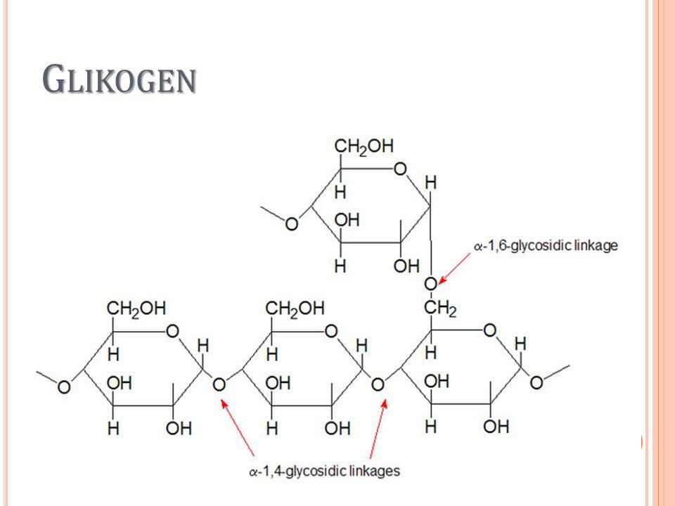 Glikogenolisis Katabolisme glikogen menjadi glukosa Enzim fosforilase untuk memutuskan ikatan glukosa satu demi satu dari glikogen Fosforilasi menyebabkan ikatan 1,4 alfa terputus dan menghasilkan glukosa-1- fosfat.