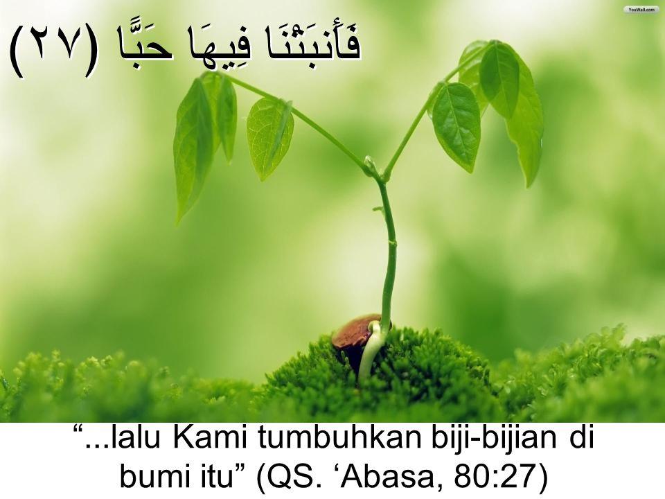 "(فَأَنبَتْنَا فِيهَا حَبًّا ﴿٢٧ ""...lalu Kami tumbuhkan biji-bijian di bumi itu"" (QS. 'Abasa, 80:27)"