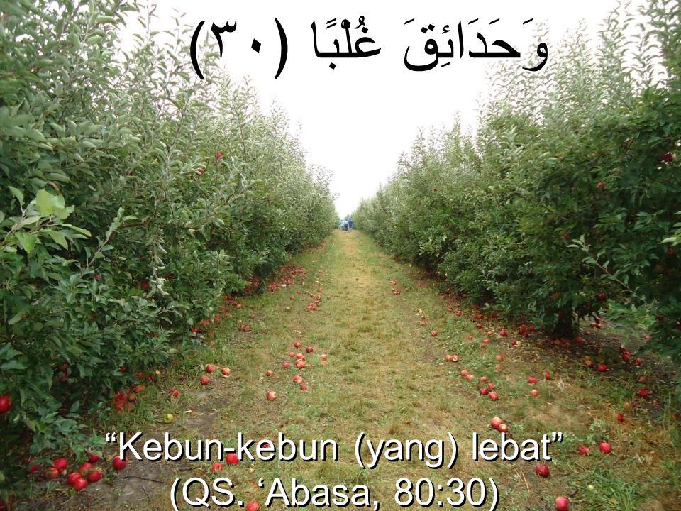 """(وَحَدَائِقَ غُلْبًا ﴿٣٠ """"Kebun-kebun (yang) lebat"""" (QS. 'Abasa, 80:30) """"Kebun-kebun (yang) lebat"""" (QS. 'Abasa, 80:30)"""