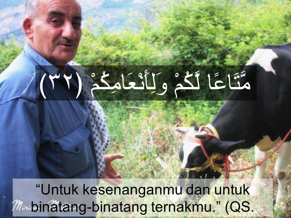 "(مَّتَاعًا لَّكُمْ وَلِأَنْعَامِكُمْ ﴿٣٢ ""Untuk kesenanganmu dan untuk binatang-binatang ternakmu."" (QS. 'Abasa, 80:31)"
