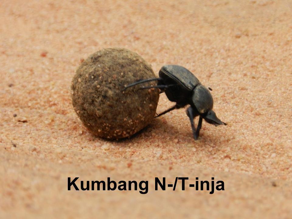 Kumbang N-/T-inja