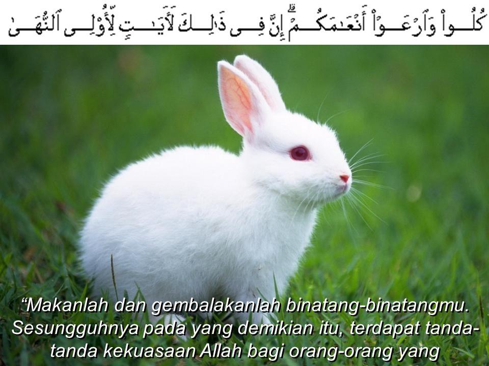 """""""Makanlah dan gembalakanlah binatang-binatangmu. Sesungguhnya pada yang demikian itu, terdapat tanda- tanda kekuasaan Allah bagi orang-orang yang bera"""