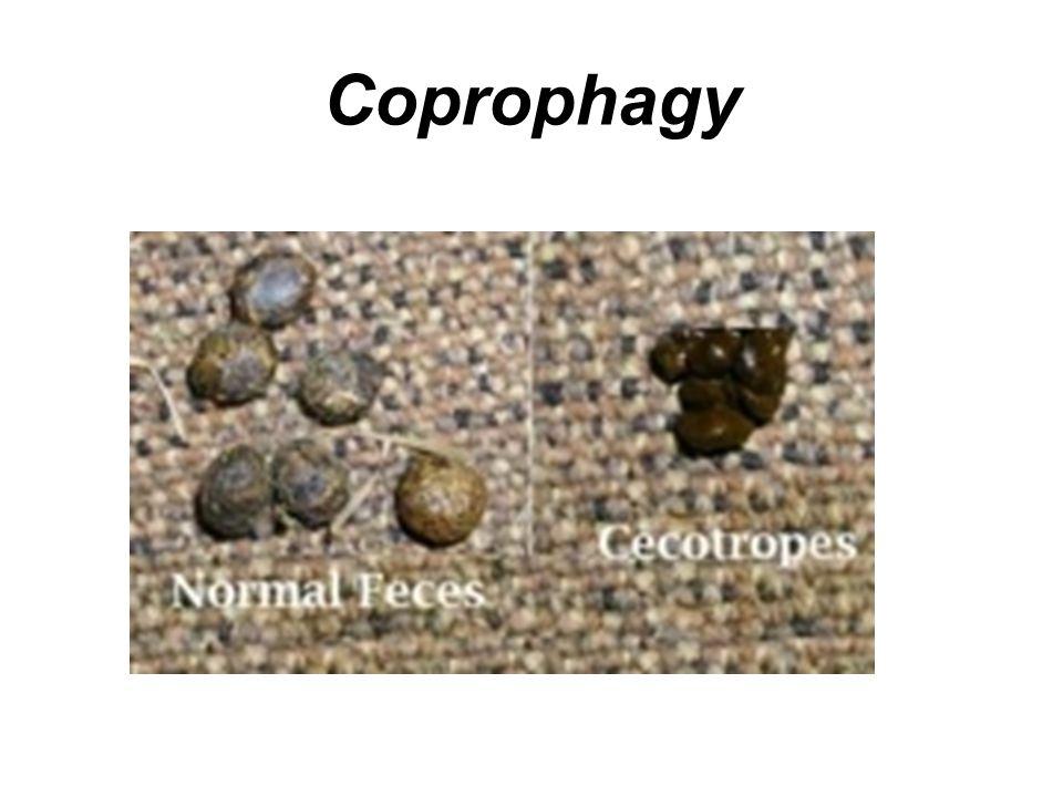 Coprophagy