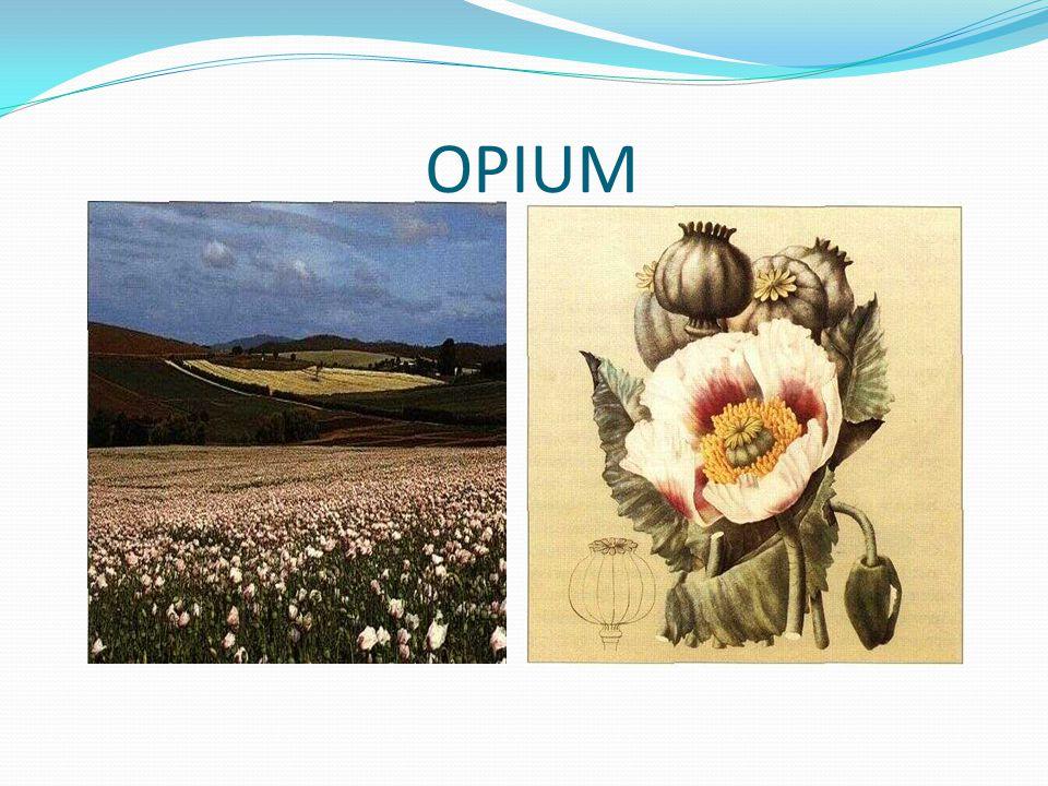 SEJARAH Irak, ditemukan 8 tanaman obat dalam kuburan berumur 60.000 tahun (Ephedra sinica) Babilonia (2100 BC) catatan paling tua di atas tanah liat tentang penggunaan tumbuhan untuk obat Mesir (1550 BC) Papyrus Ebers Catatan penggunaan tumbuhan dan hewan untuk pengobatan Dioscorides (78 AD) menulis Materia Medica tentang penggunaan 600 tumbuhan obat seperti Aloe, Belladonna, Ergot, Opium
