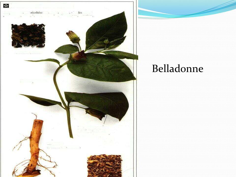 Aloe L'aloès a des feuilles épineuses qui produisent des substances très utilisées en médecine