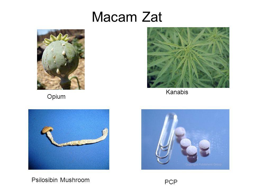 Macam Zat PCP Psilosibin Mushroom Kanabis Opium
