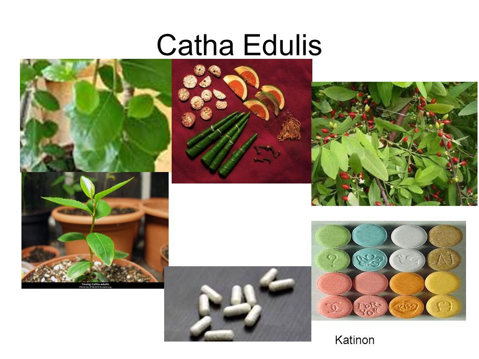 Catha Edulis Katinon