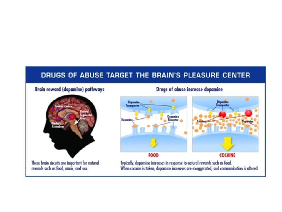 Zat Bekerja Di Pusat Kesenangan Kebanyakan zat bekerja langsung atau tidak langsung pada target sistem reward otak dengan membanjirinya Dopamin.