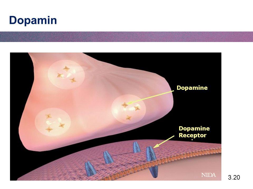 3.20 Dopamin Dopamine Dopamine Receptor