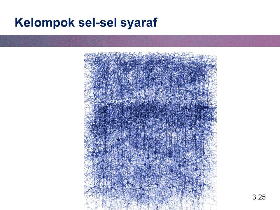 3.25 Kelompok sel-sel syaraf