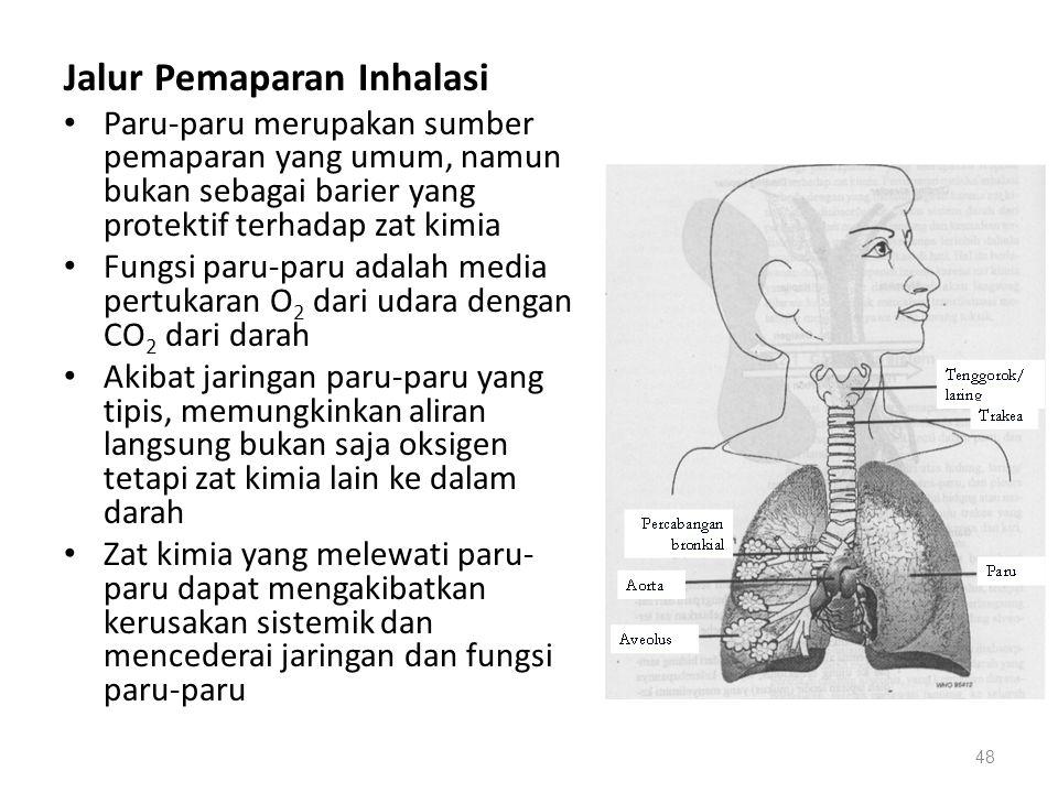 Jalur Pemaparan Inhalasi Paru-paru merupakan sumber pemaparan yang umum, namun bukan sebagai barier yang protektif terhadap zat kimia Fungsi paru-paru adalah media pertukaran O 2 dari udara dengan CO 2 dari darah Akibat jaringan paru-paru yang tipis, memungkinkan aliran langsung bukan saja oksigen tetapi zat kimia lain ke dalam darah Zat kimia yang melewati paru- paru dapat mengakibatkan kerusakan sistemik dan mencederai jaringan dan fungsi paru-paru 48