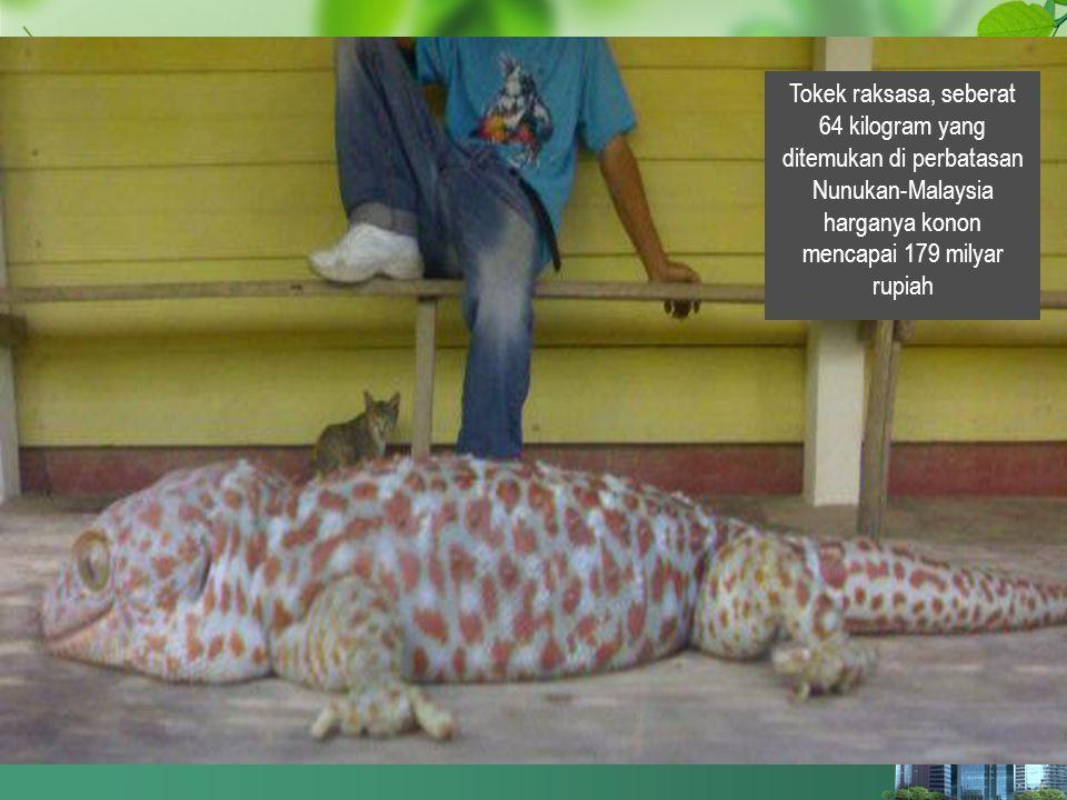 bercakar - bertaring كُلِّ ذِي نَابٍ مِنْ اَلسِّبَاعِ فَأَكَلَهُ حَرَامٌ- وَزَادَ: وَكُلُّ ذِي مِخْلَبٍ مِنْ اَلطَّيْرِ Semua hewan yang punya taring dari hewan buas, maka haram hukumnya untuk dimakan .