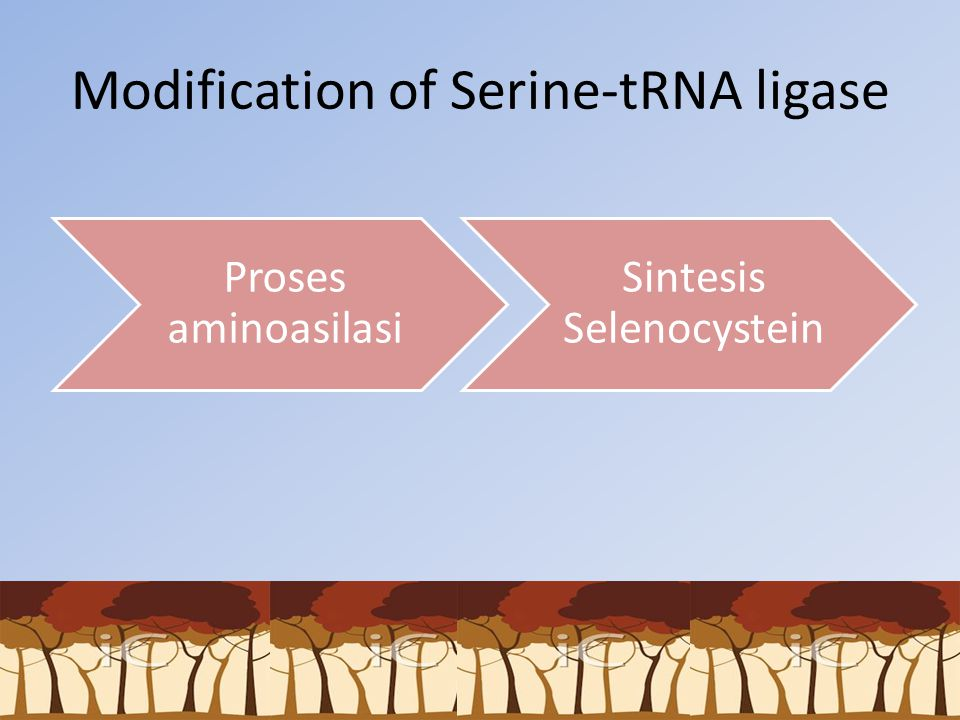 Modification of Serine-tRNA ligase Proses aminoasilasi Sintesis Selenocystein