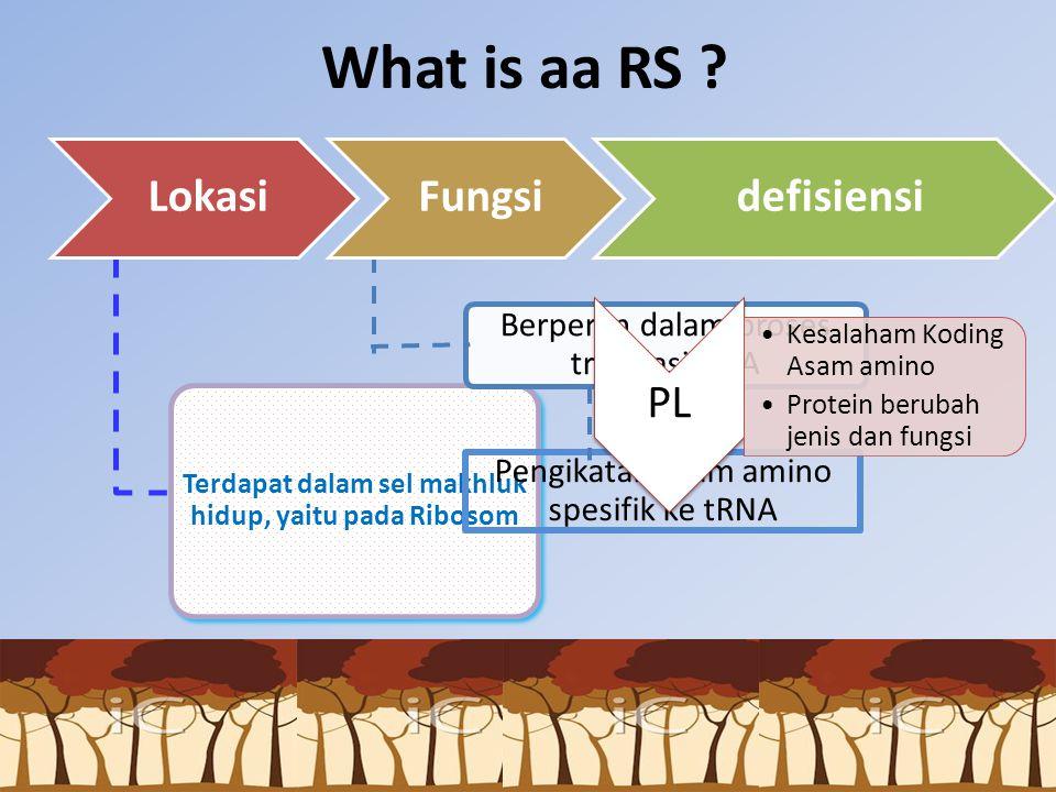 What is aa RS ? Terdapat dalam sel makhluk hidup, yaitu pada Ribosom Pengikatan asam amino spesifik ke tRNA Berperan dalam proses translasi RNA PL Kes