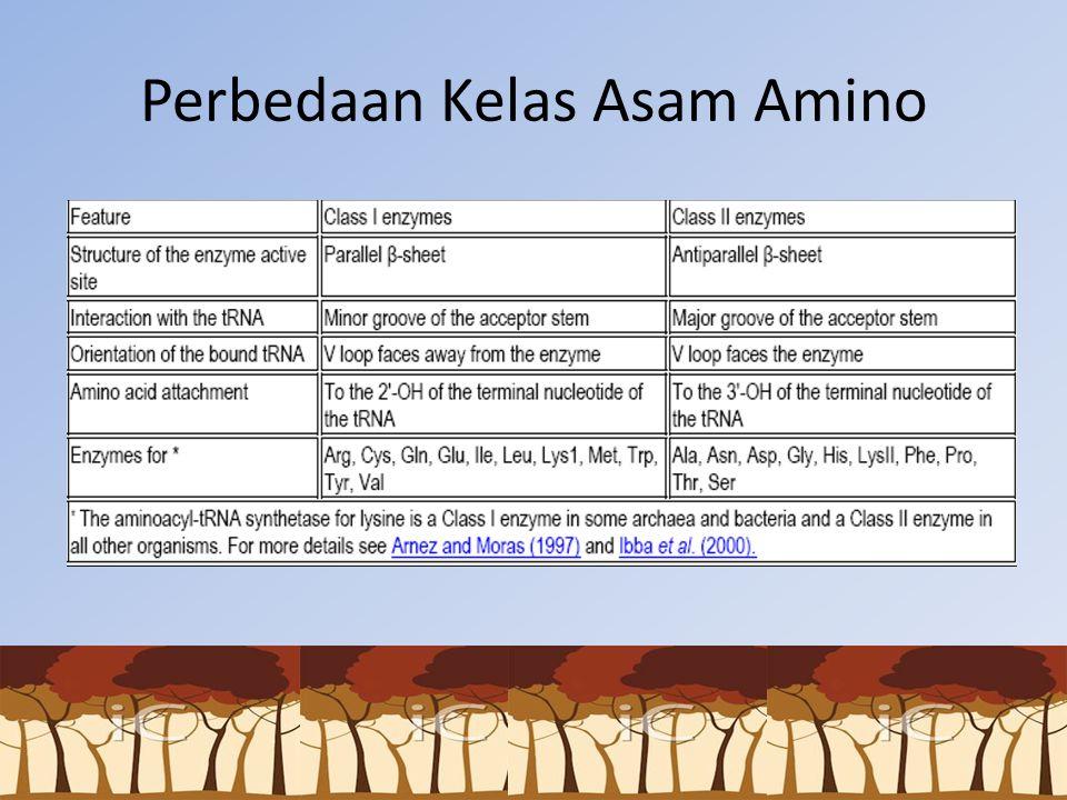 Perbedaan Kelas Asam Amino