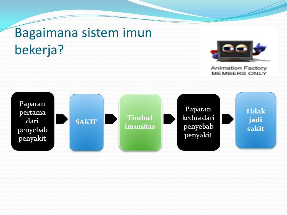 Bagaimana sistem imun bekerja? Paparan pertama dari penyebab penyakit SAKIT Timbul imunitas Paparan kedua dari penyebab penyakit Tidak jadi sakit