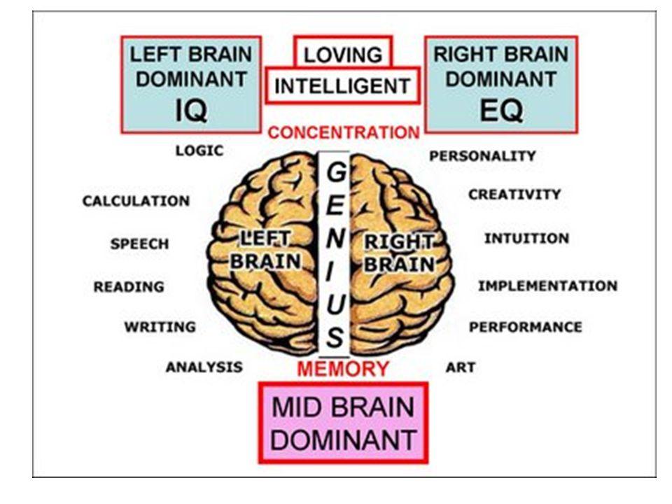 Otak kanan berfungsi dalam perkembangan EQ (Emotional Quotient), seperti hal persamaan, khayalan, kreativitas, bentuk atau ruang, emosi, musik dan warna.