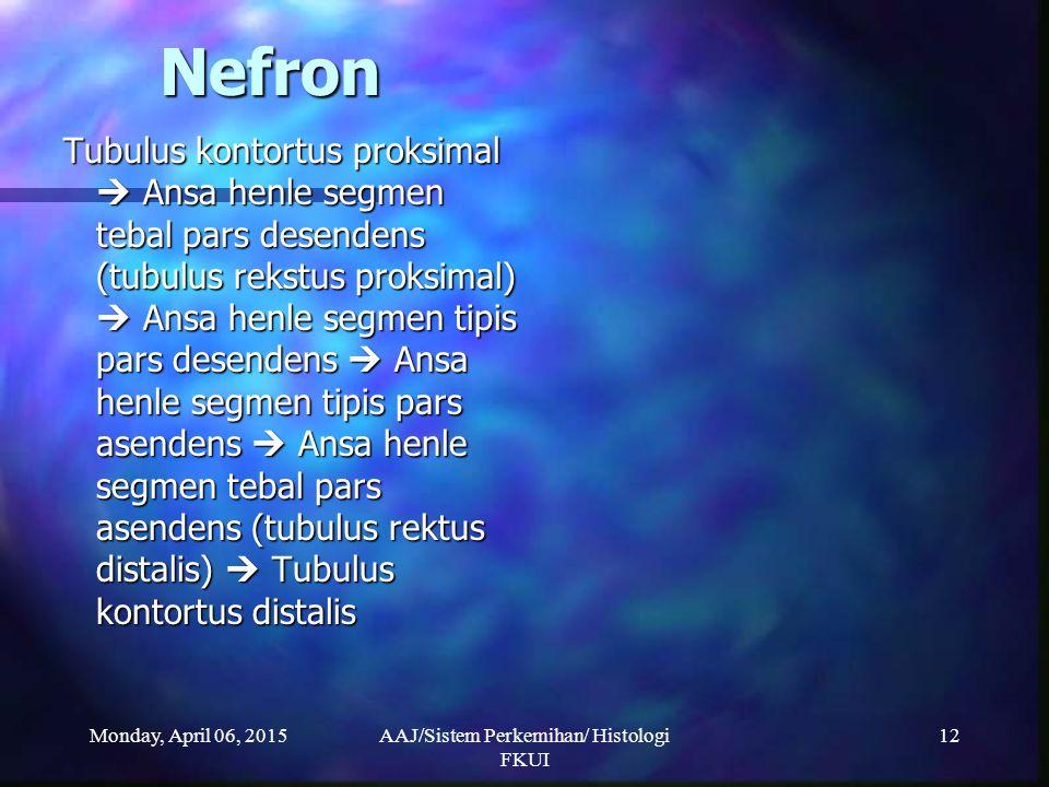 Monday, April 06, 2015AAJ/Sistem Perkemihan/ Histologi FKUI 12 Nefron Tubulus kontortus proksimal  Ansa henle segmen tebal pars desendens (tubulus re