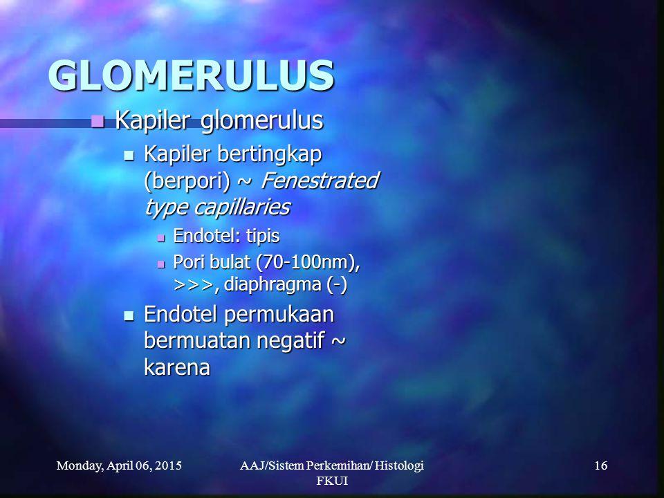 Monday, April 06, 2015AAJ/Sistem Perkemihan/ Histologi FKUI 16 GLOMERULUS Kapiler glomerulus Kapiler glomerulus Kapiler bertingkap (berpori) ~ Fenestr