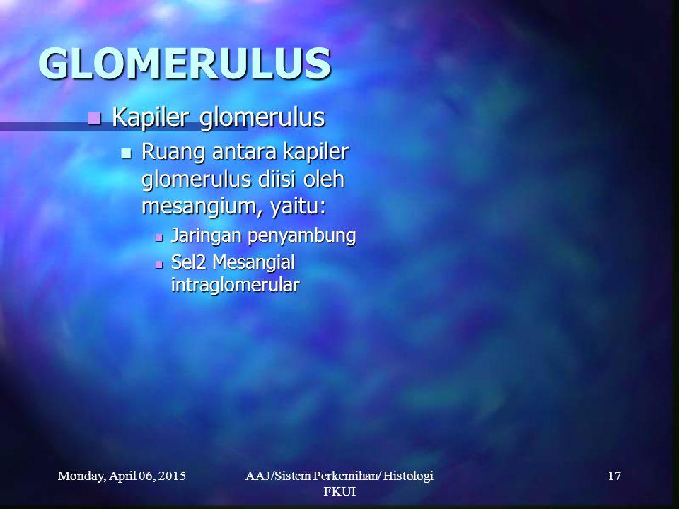 Monday, April 06, 2015AAJ/Sistem Perkemihan/ Histologi FKUI 17 GLOMERULUS Kapiler glomerulus Kapiler glomerulus Ruang antara kapiler glomerulus diisi
