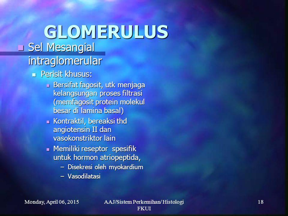 Monday, April 06, 2015AAJ/Sistem Perkemihan/ Histologi FKUI 18 GLOMERULUS Sel Mesangial intraglomerular Sel Mesangial intraglomerular Perisit khusus: