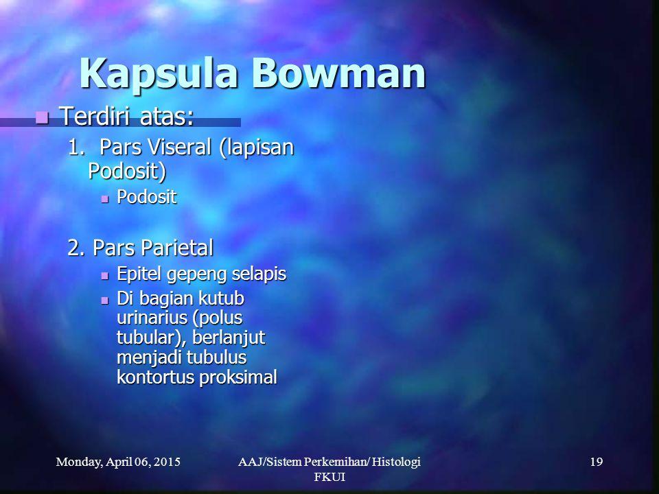 Monday, April 06, 2015AAJ/Sistem Perkemihan/ Histologi FKUI 19 Kapsula Bowman Terdiri atas: Terdiri atas: 1. Pars Viseral (lapisan Podosit) Podosit Po