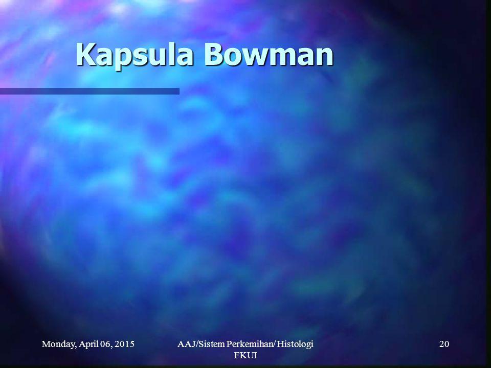 Monday, April 06, 2015AAJ/Sistem Perkemihan/ Histologi FKUI 20 Kapsula Bowman