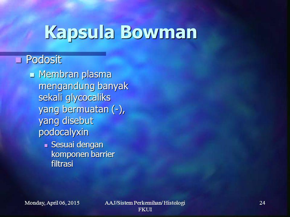 Monday, April 06, 2015AAJ/Sistem Perkemihan/ Histologi FKUI 24 Kapsula Bowman Podosit Podosit Membran plasma mengandung banyak sekali glycocaliks yang