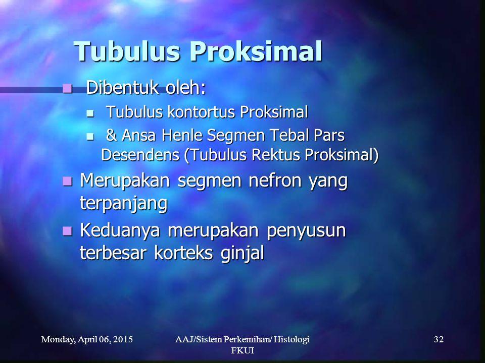 Monday, April 06, 2015AAJ/Sistem Perkemihan/ Histologi FKUI 32 Tubulus Proksimal Dibentuk oleh: Dibentuk oleh: Tubulus kontortus Proksimal Tubulus kon